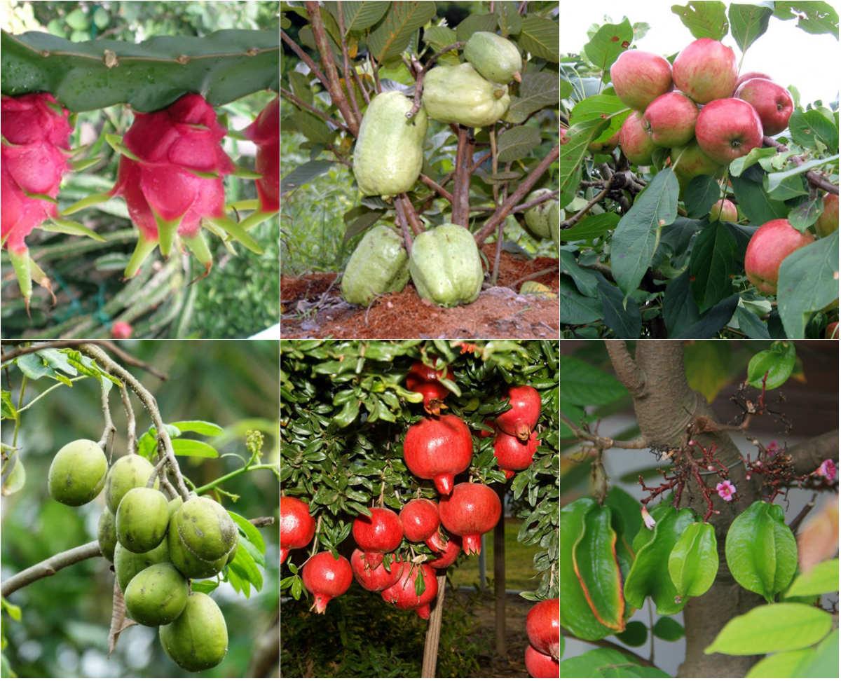 phân bón cho cây ăn trái